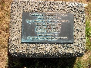 Parkway tree plaque