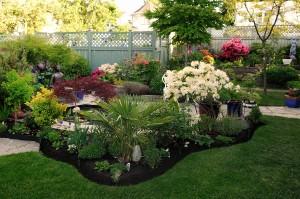 Peters' Garden_DSC6857